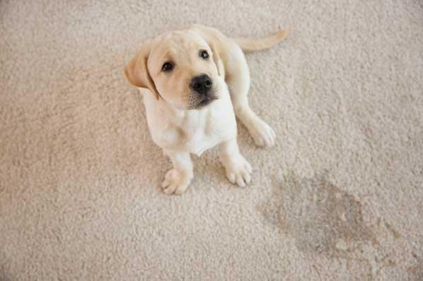 Pet-Urine-Removal